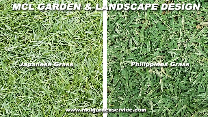 Grasses For Sale