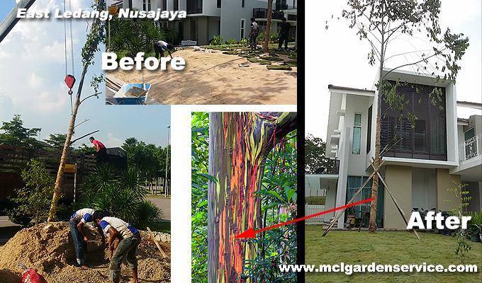 Tree Planting Johor